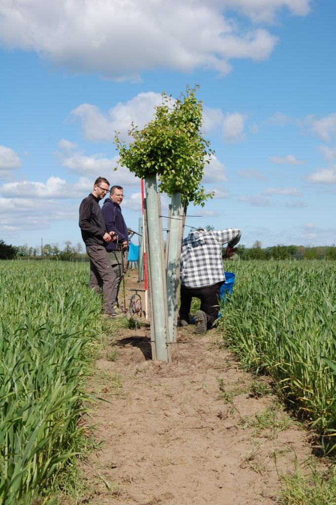 Forscher setzen Bäume auf einen Acker