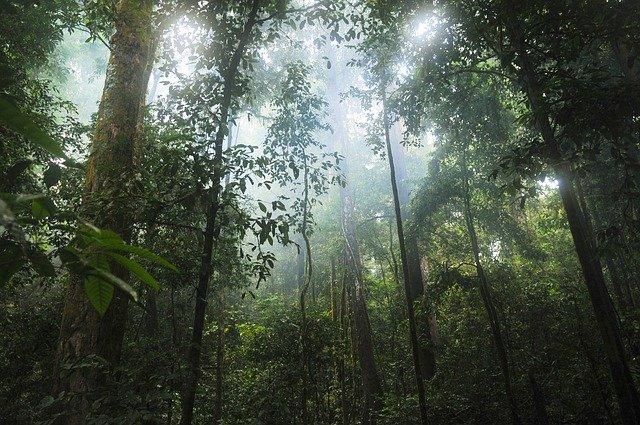 Regenwald in den Tropen, Blick in die Baumwipfel