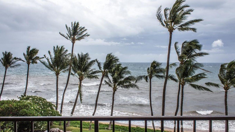 Windgepeitschte Wellen und Palmen an Meeresküste