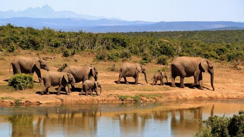 Elefantenherde in Afrika