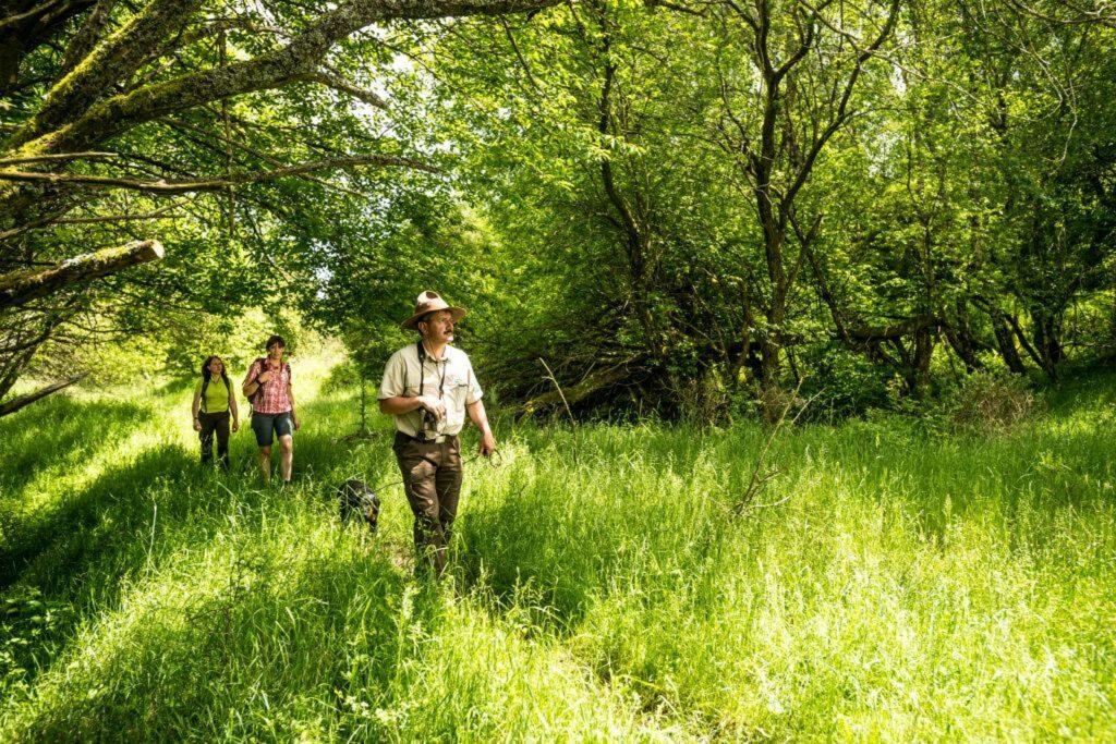 Ein Ranger führt Wanderer durch die Wildnis des Nationaparks Eifel und zeigt ihnen die Natur