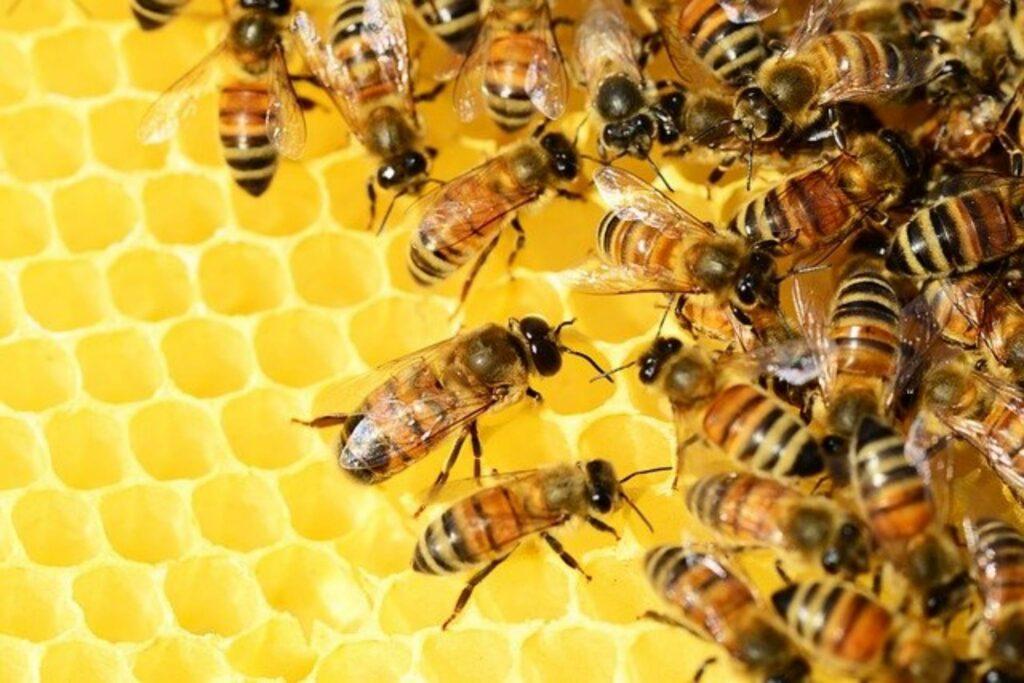 Insekten wie diese Bienen in ihrem Korb sollen geschützt werden
