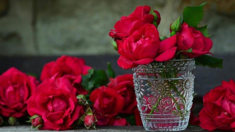 frisch geschnittene Rote Rosen