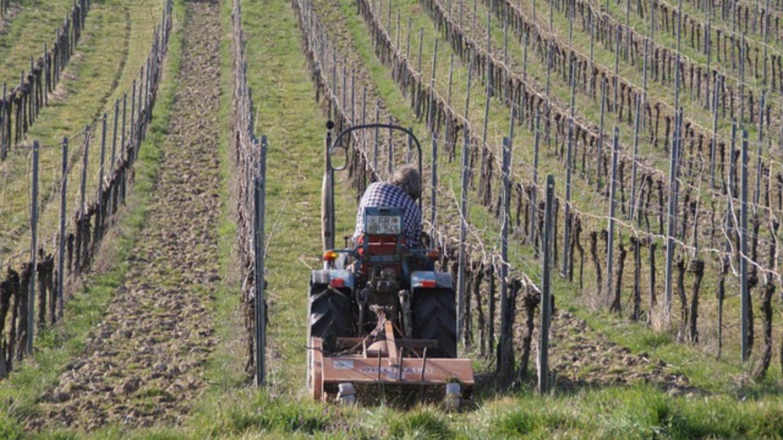 Winzer bearbeitet einen Weinberg per Traktor