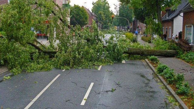Ein umgestürzter Baum blockiert eine Straße