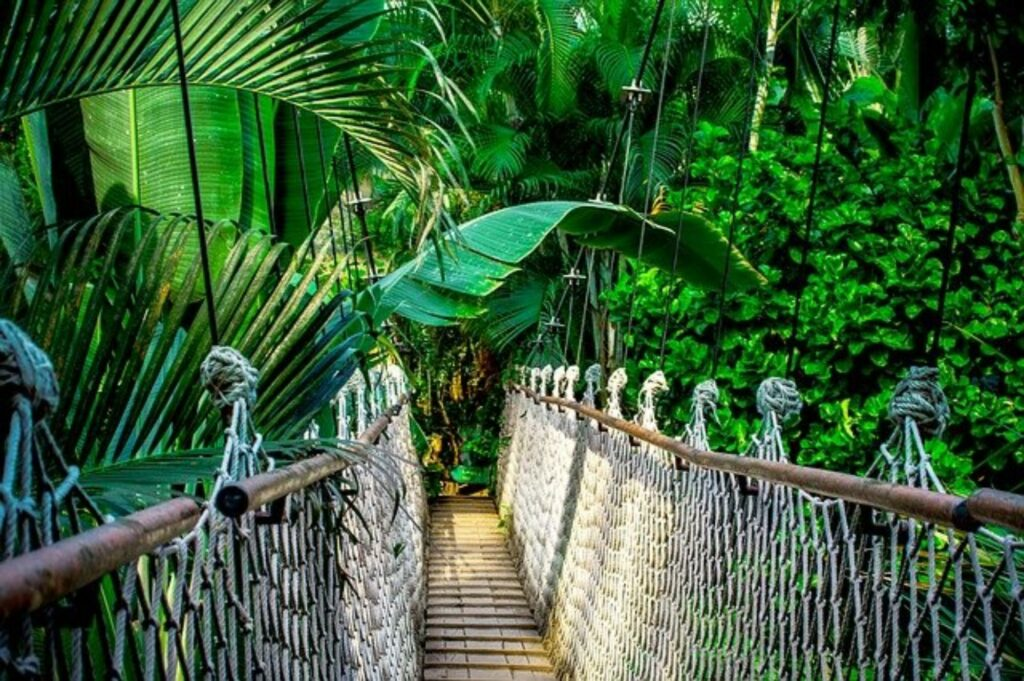 Hängebrücke im Regenwald am Amazonas
