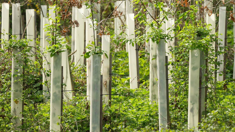 Aufforstungs-Schonung im Wald